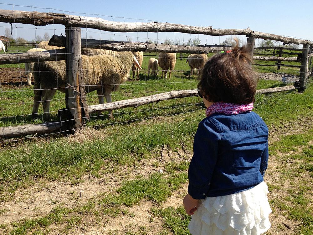 fattoria_14 aprile