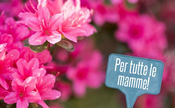 fiori azalea airc per festa della mamma per lotta contro i tumori