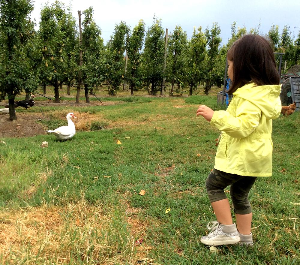 bambina in campagna in un giorno di pioggia con parka impermeabile color giallo lime, leggings mimetici camo camouflage e sneakers crime